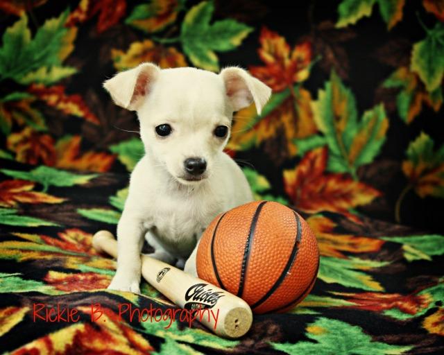 lets play ball rickieb