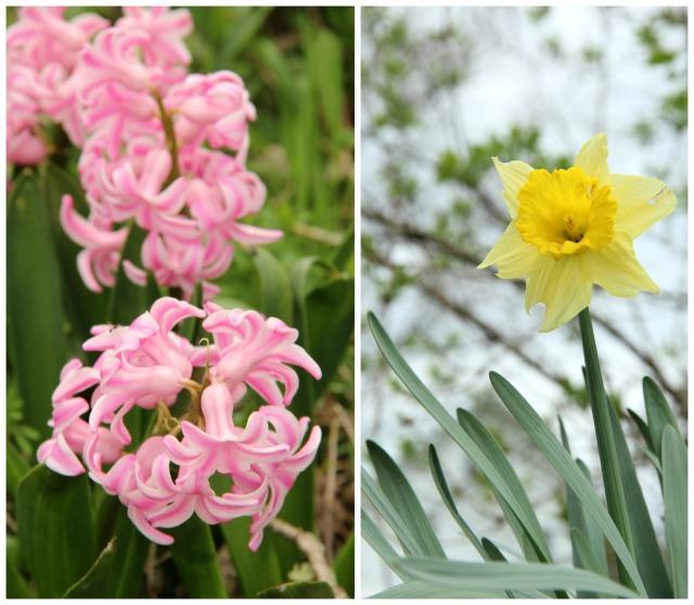 spring 0