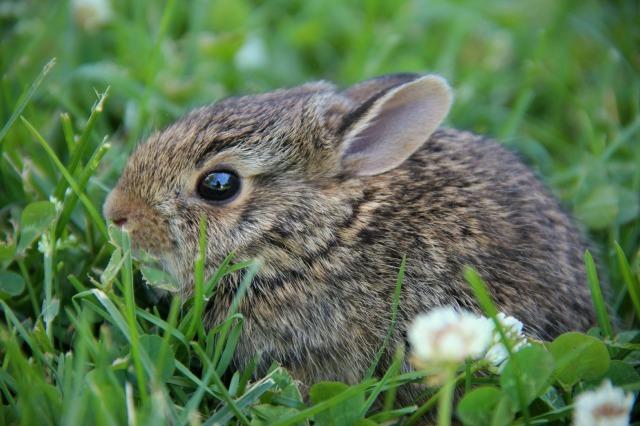 bunny 019